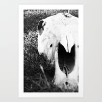 The Skull of a Cow Art Print