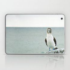 blue-footed booby Laptop & iPad Skin