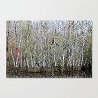 Autumn In The Everglades Canvas Print