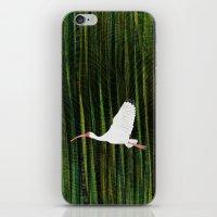 American White Ibis In F… iPhone & iPod Skin