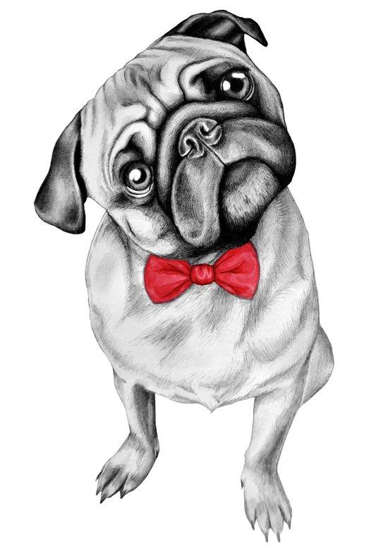 Percy Pug Art Print