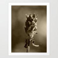 Dead Weed II Art Print