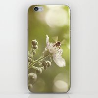 Busy Little Bee Bum iPhone & iPod Skin