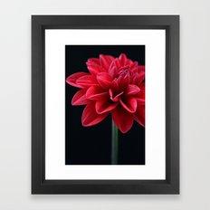 Red Velvet Dahlia Framed Art Print