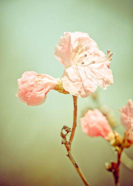 Aprils' Pink blossom Art Print