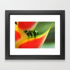 Exotic Flower - Heliconia 361 Framed Art Print