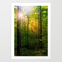 Morning sun in the forest Art Print