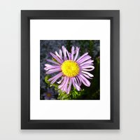 Magenta Aster - A Star of Love and Fidelity Framed Art Print