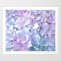 pastel Art Prints featuring Soft Pastel Hydrangea by Judy Palkimas
