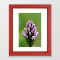Common Spotted Orchid Framed Art Print