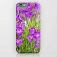 Spring crocus  iPhone 6 Slim Case