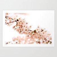 Cherry Blossom Explosion Art Print