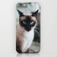 Blue-eyed Cat iPhone 6 Slim Case