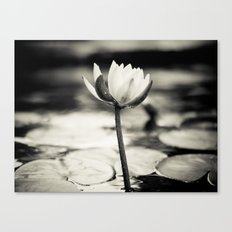 Black and White Cajun Water Lily Canvas Print