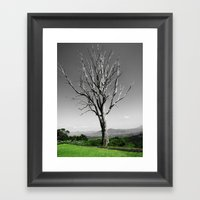 Blue Gum Tree Framed Art Print