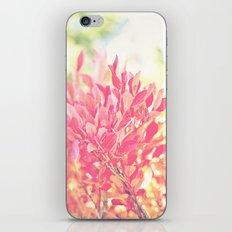 Burst of Red iPhone & iPod Skin
