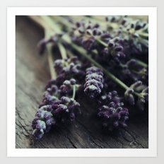 Lavender Harvest Art Print