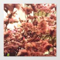 Cherry Blossoms 3 Canvas Print