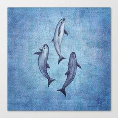 Three Little Vaquitas Canvas Print