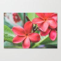 Soft Summer Plumeria Canvas Print