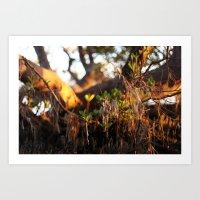 Love of mangroves  Art Print