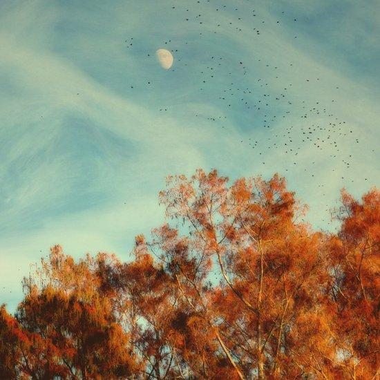 Moon and Birds Over Cypress Trees Art Print