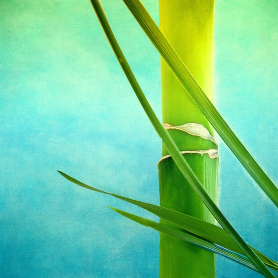 WELLNESS BAMBOO Art Print