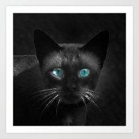 Siamese Blue Art Print