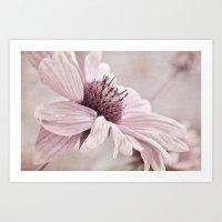 Floral - Soft Magenta Art Print