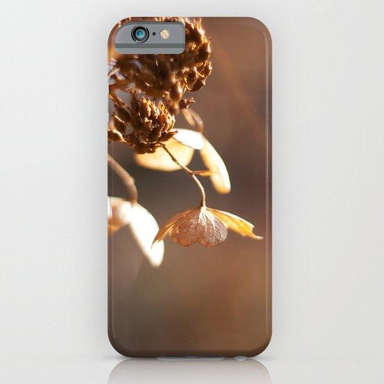 Butterflies in December iPhone & iPod Case