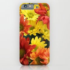 Red, yellow and orange colorful autumn daisy flowers. floral photography. Slim Case iPhone 6s