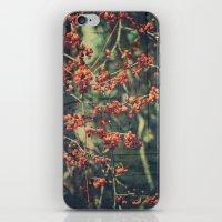 Autumn Botanical -- American Bittersweet Vine, Celastrus scandens, Painterly iPhone & iPod Skin