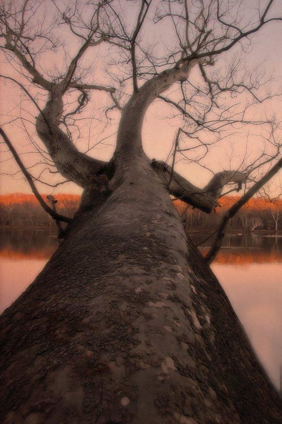 nature's perspective Art Print