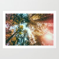 California Redwoods Sun-… Art Print