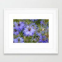 Love in the Mist Framed Art Print
