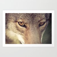 In The Eyes Of The Coyot… Art Print
