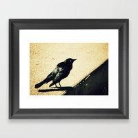 Little Blackbird Framed Art Print