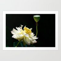 Stages of Lotus Art Print