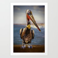 Peter Pelican Portrait Art Print