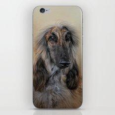 The Elegant Afghan Hound iPhone & iPod Skin