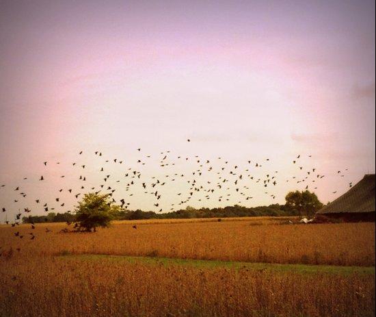 Birds flying at sunset Art Print