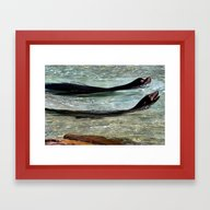 SEA LIONS At The ZOO Framed Art Print