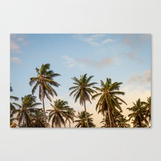 Sky beach palmier Canvas Print