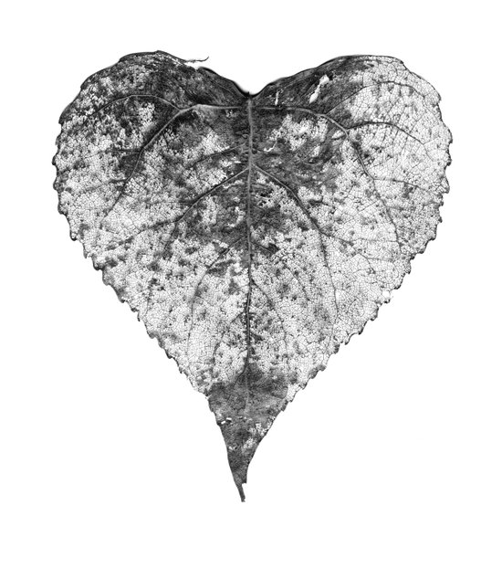 heart b&w Art Print