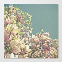 Magnolia in Bloom Canvas Print