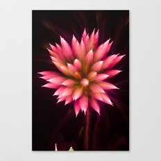 Efflorescence 2 Canvas Print