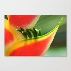 Exotic Flower - Heliconia 361 Canvas Print