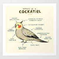 Anatomy of a Cockatiel Art Print