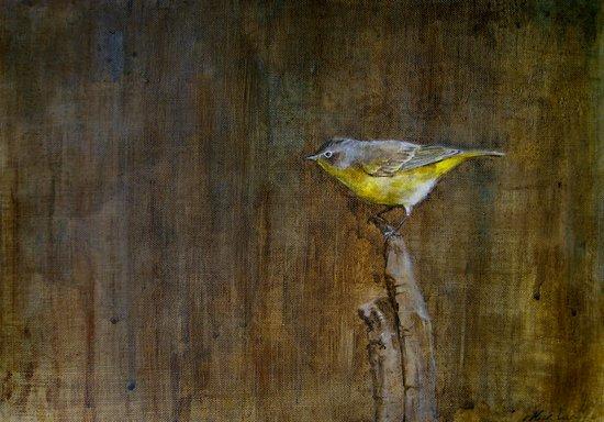Nashville Warbler Canvas Print