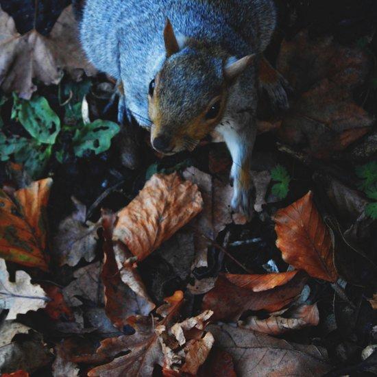 Autumn Squirrel  Art Print